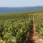 Zadar, 31.07.2013 - Kraljevski vinograd.