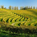 vinske poti